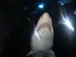 Shark suprises